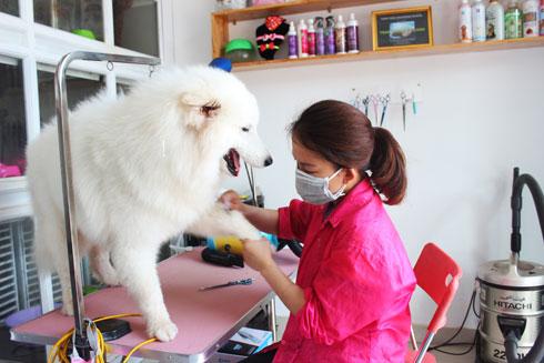 Dịch vụ chăm sóc thú cưng đòi hỏi nhiều kỹ năng chuyên môn